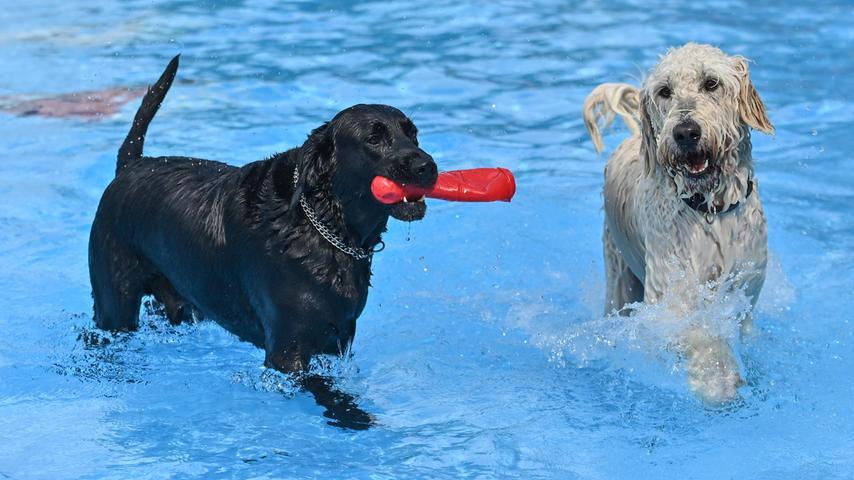 Im Wasser schwamm jede Menge Spielzeug, dass die Herrchen und Frauchen hineingeworfen hatten, und nicht selten schwammen die Hunde um die Wette, um es als erster zu schnappen.