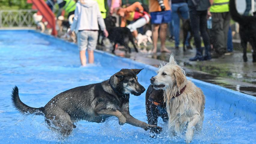 """Aber auch im Pool fühlt sich Luna wohl, wenngleich sie hier ein bisschen zurückhaltender ist. """"Vermutlich wegen der vielen anderen Hunde"""", glaubt er."""