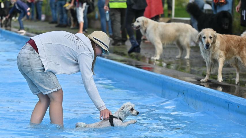 """Auch das Spielzeug, das ihm sein Frauchen vor die Nase hält, lässt ihn kalt. """"Den Hundepool zu Hause mag er auch nicht so gerne, aber es wird Zeit, dass er sich an Wasser gewöhnt"""", findet Schermer. """"Vielleicht kann ich ihn hier ja ein paar positive Erlebnisse mit Wasser bereiten""""."""