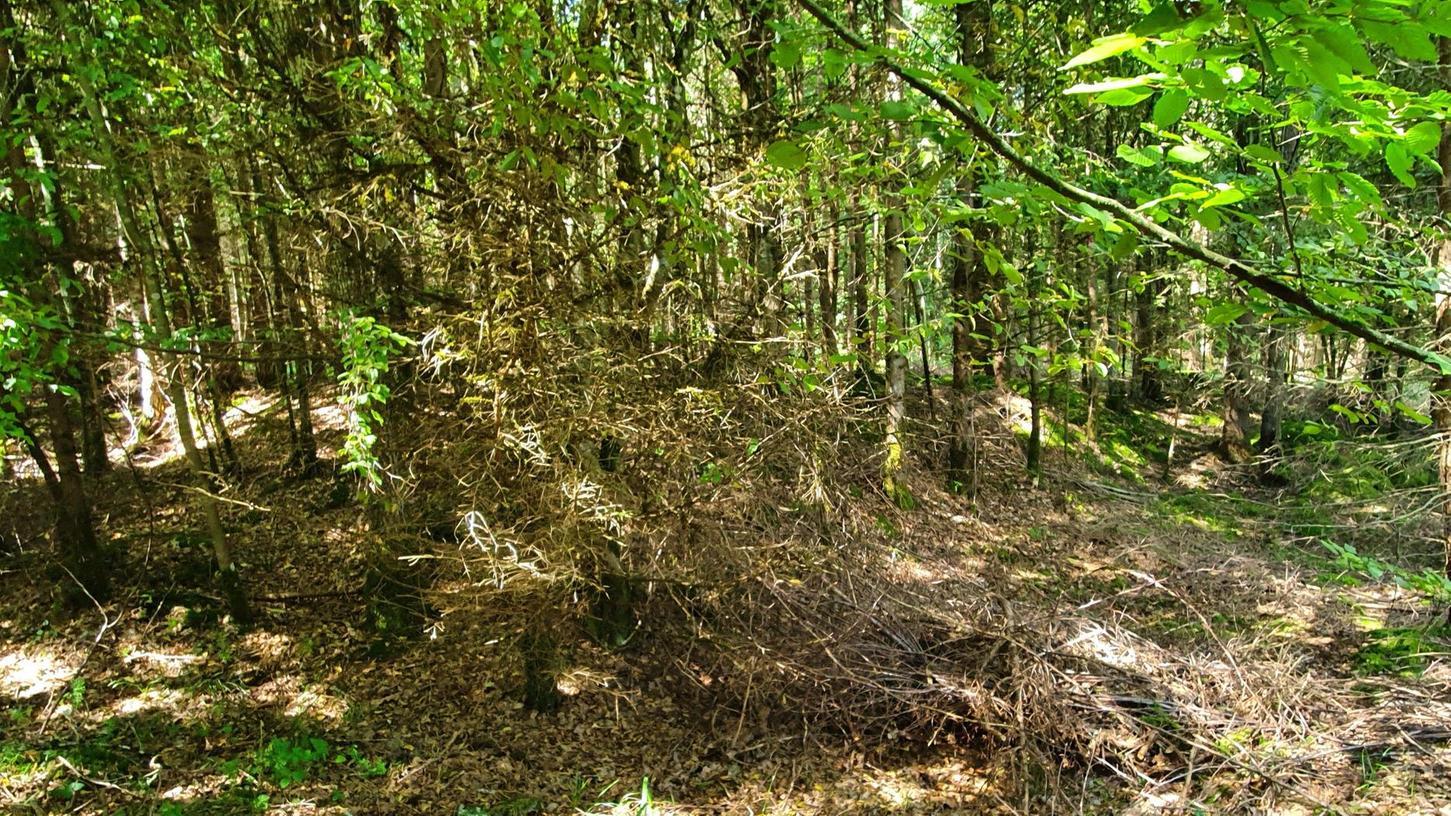 """Im Dietfurter Waldgebiet """"Dicke"""" sind die Wälle nur schwer erkennbar."""