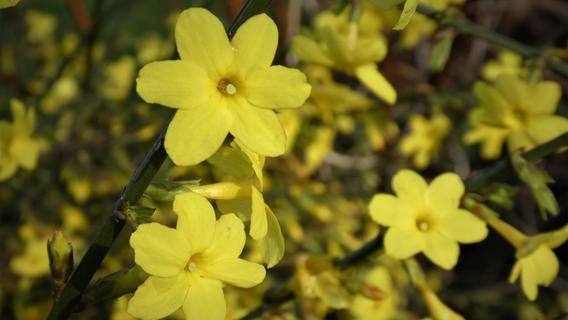 Gerade, wenn es kalt ist: Diese Pflanzen blühen im Herbst und Winter