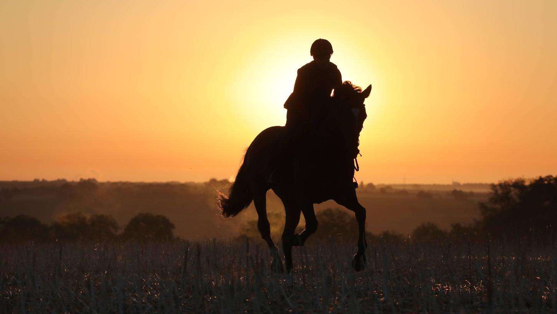 Nürnberger Land: Erzürnter Acker-Besitzer schlägt mit Spaten auf Reiter ein
