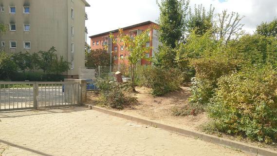 Lehrerin der Pestalozzischule beklagt die Fällung zweier alter Kiefern auf dem Gelände