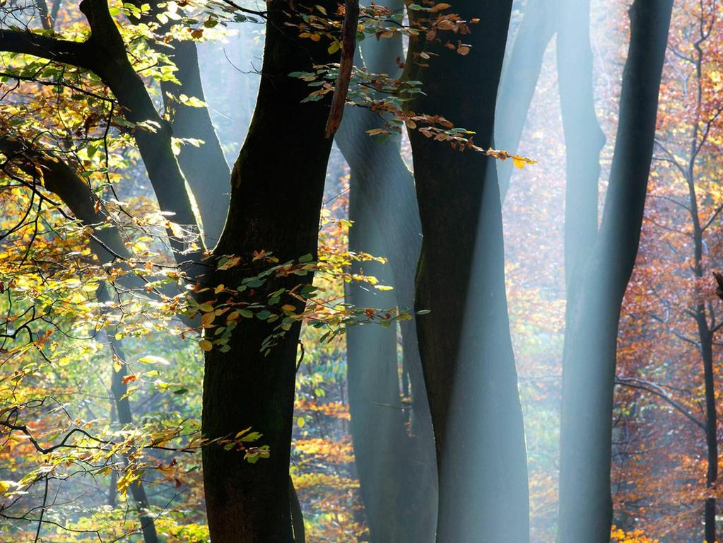Dem Wald wird eine gesundheitsfördernde Wirkung zugeschrieben. Manche sind davon überzeugt, dass dieser sogar heilen kann.