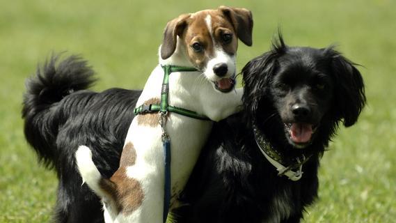 An die Leine: Schwabach lehnt Hundefreilaufwiese ab