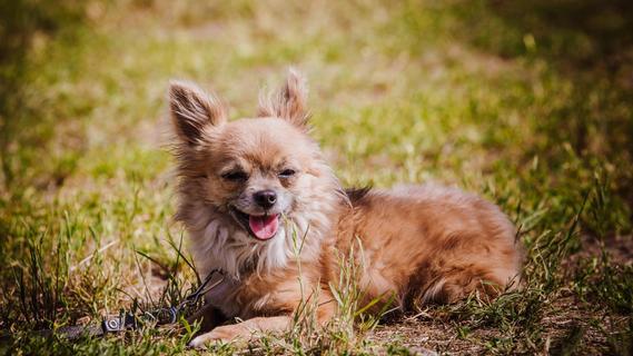 Tierheim Forchheim: Wir suchen ein Zuhause