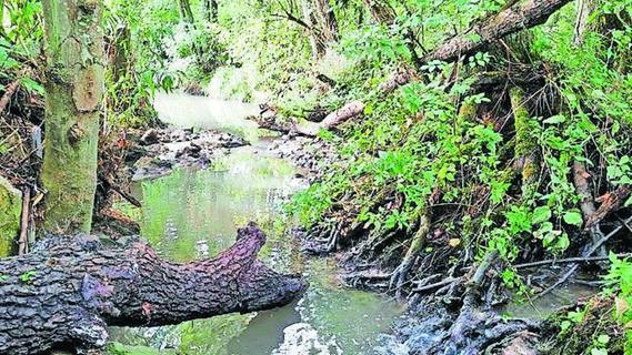 Flüsse der Umgebung sollen verbessert werden