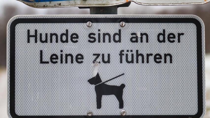 Leinenpflicht gilt zum Beispiel in Parks für alle Hunde.