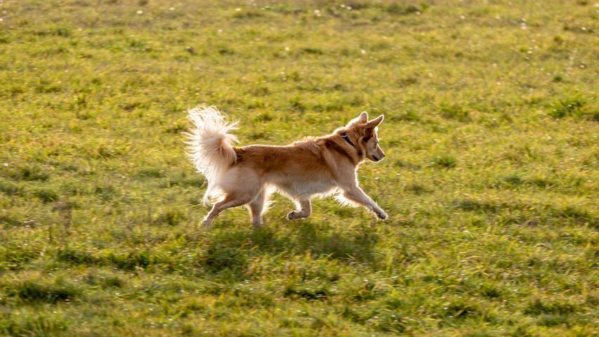 Auch im Naturschutzgebiet müssen Hunde an die Leine genommen werden.