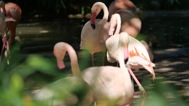 Ist hier Ingo dabei? Flamingos sind die Rosa Stars im Zoo.