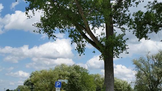 Trotz Proteststurm: Parken am Baiersdorfer Baggersee wird richtig teuer