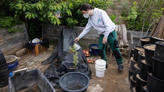 Tigermückenplage in Fürth: Experten verzeichnen erste Erfolge