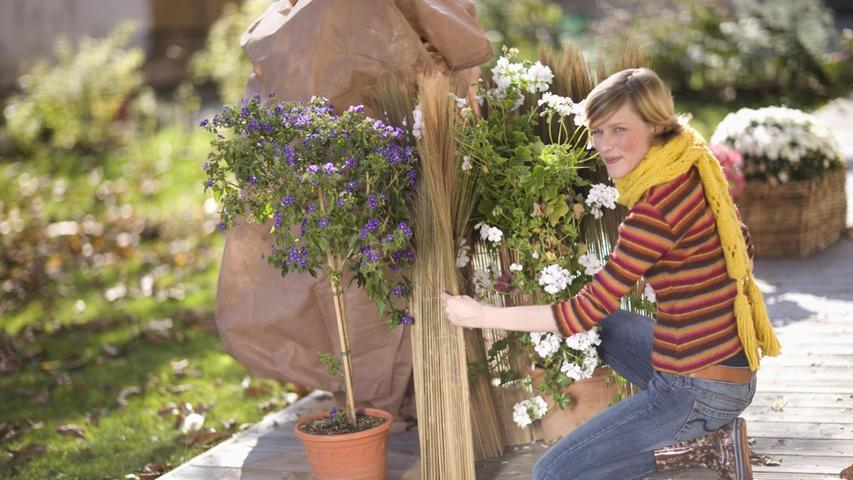 Vorsicht, Frost: Was Gartenpflanzen jetzt wirklich brauchen
