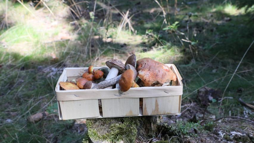Obst und Gemüse: Der Saisonkalender für Oktober