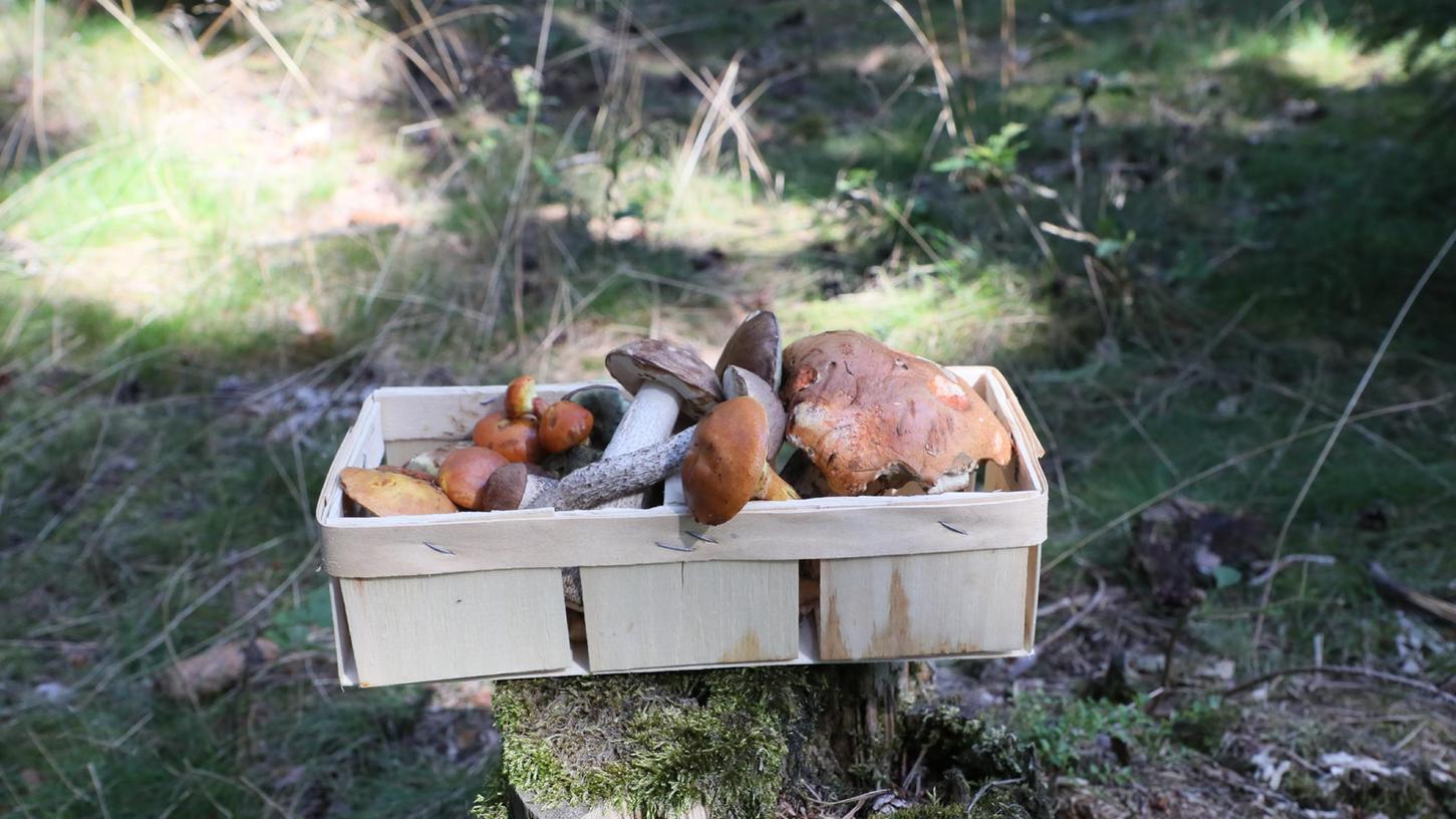 In den Wäldern ist jetzt die Zeit, selbst zu ernten (aber bitte nur mit Bestimmungs-App oder -buch). Aber auch auf den Märkten und im Supermarkt sindaktuell wieder viele Pilzarten zu haben.