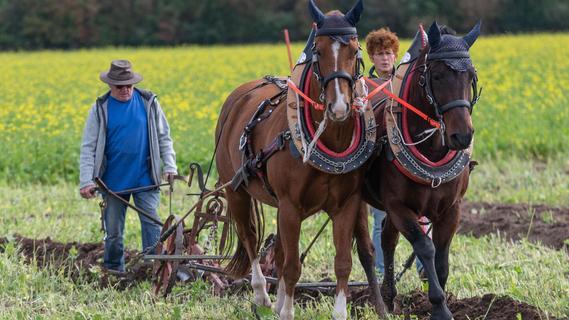 Pflügen wie Uropa: Bayerischer Meister kommt aus Dillingen
