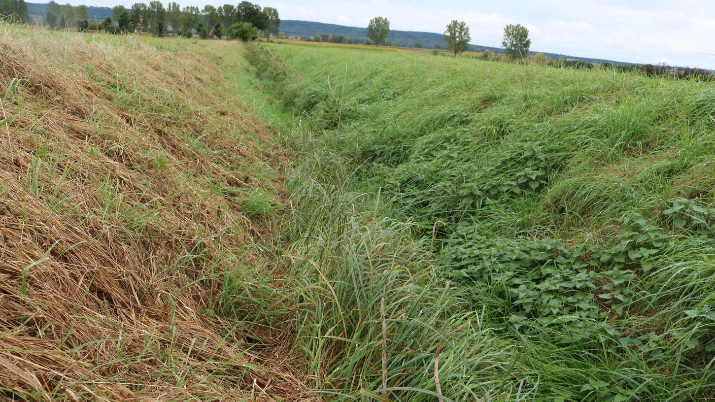 Solche Grünen Gräben führen nicht immer Wasser. Mit Schiebern soll dieses nun aufgestaut werden, damit es versickern kann.
