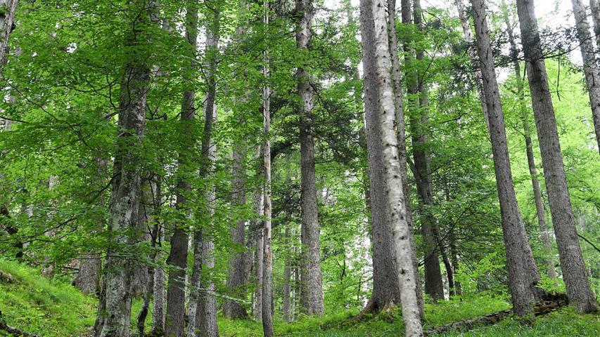 Auch der Wald leidet unter der Trockenheit. Im Landkreis wird untersucht, wie Dürreperioden vorhergesagt werden können.