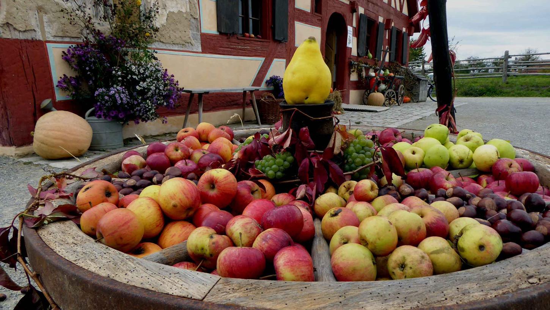 Über alte heimische Obstsorten können sich die Besucher beim