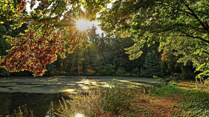 Der Herbst hat am Haagsweiher am Feuchter Ortsrand in seinen Farbkasten gegriffen.