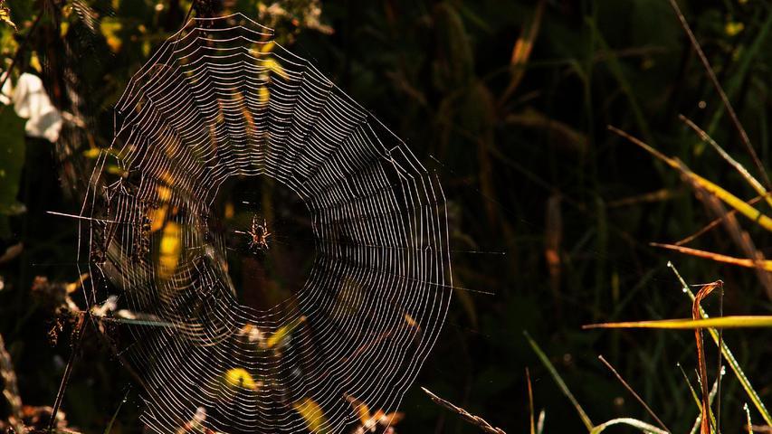 Das Netz der Spinne glitzert in der Morgensonne. Jetzt muss nur noch Kundschaft kommen...
