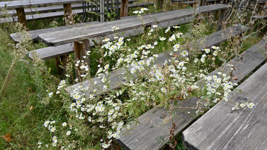 Unter und zwischen den Bänken und Tischen wuchert Unkraut zum Teil meterhoch, aus jeder Ritze und jedem Spalt kriecht die Natur in grünem Gewande hervor und erobert sich den Berg zurück.