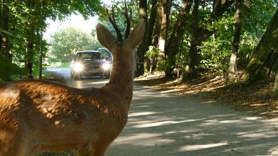 Vorsicht Wildwechsel: Im Herbst wird's wieder riskanter auf Bayerns Straßen