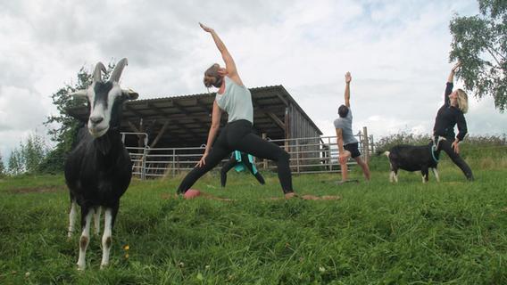 Yoga mit Ziegen: