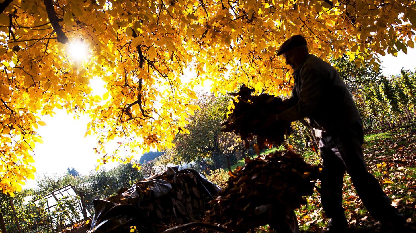 Laub ist wertvolle Biomasse und sollte aus unterschiedlichen Gründen im Garten bleiben. Allerdings sollte Sie denRasen unbedingt davon befreien.