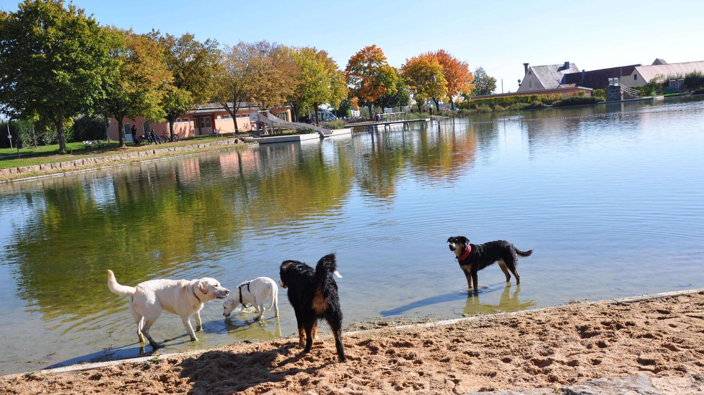 Im Merkendorf Naturfreibad Weißbachmühle stand zum Saisonende der 1. Hundebadetag an. Rund 30 Fellnasen und ihre Besitzer nahmen diese Angebot gerne an.