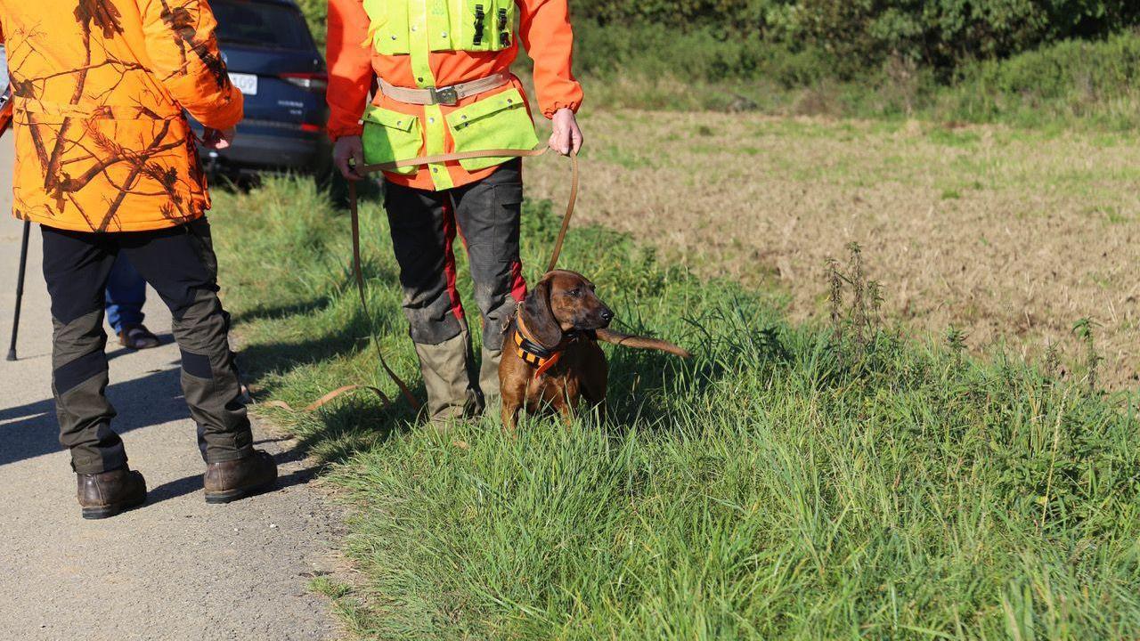 Ein Schweißhund wurde eingesetzt, der eine Lebendfährte in der Nähe des Golfplatzes erschnüffelte.