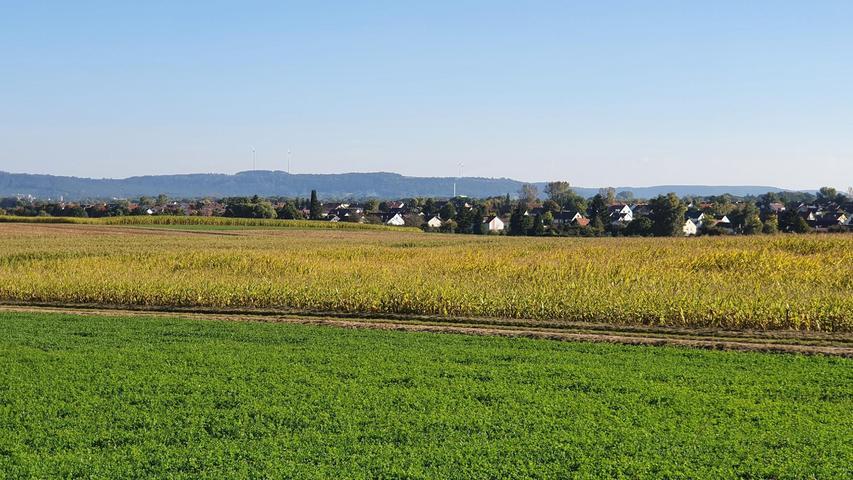 Den Acker nördlich von Pölling bearbeitete der Landwirt am Samstagmorgen mit dem Maishäcksler – was dem dort niedergelassenen Wildschwein freilich gar nicht behagte.