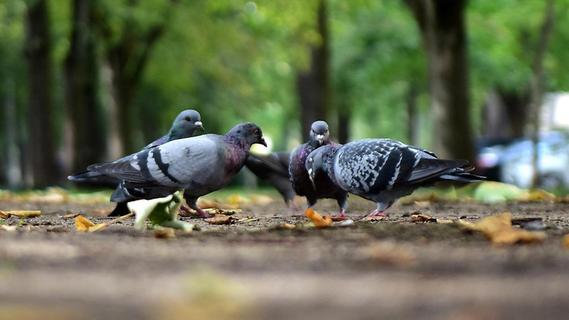 Taubendreck in Fürth: Es gibt wieder neue Klagen