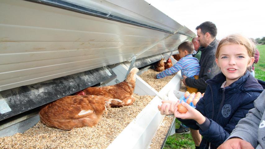 """""""Ostereiersuche"""" im Herbst: Am Hühnermobil werden die Eier eingesammelt."""