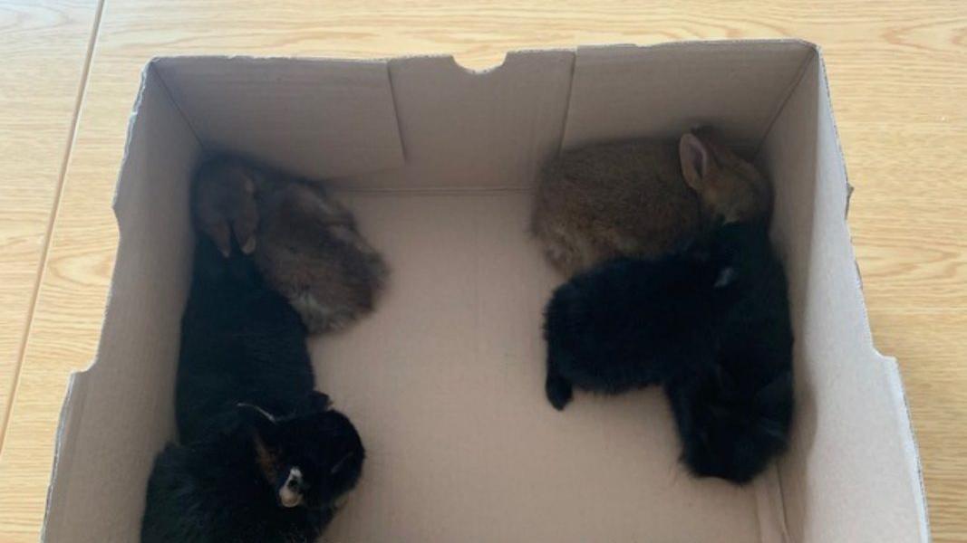 Sie finden nun ein neues Zuhause: Sechs Hasenbabys wurden in Würzburg aus einem Rucksack befreit.