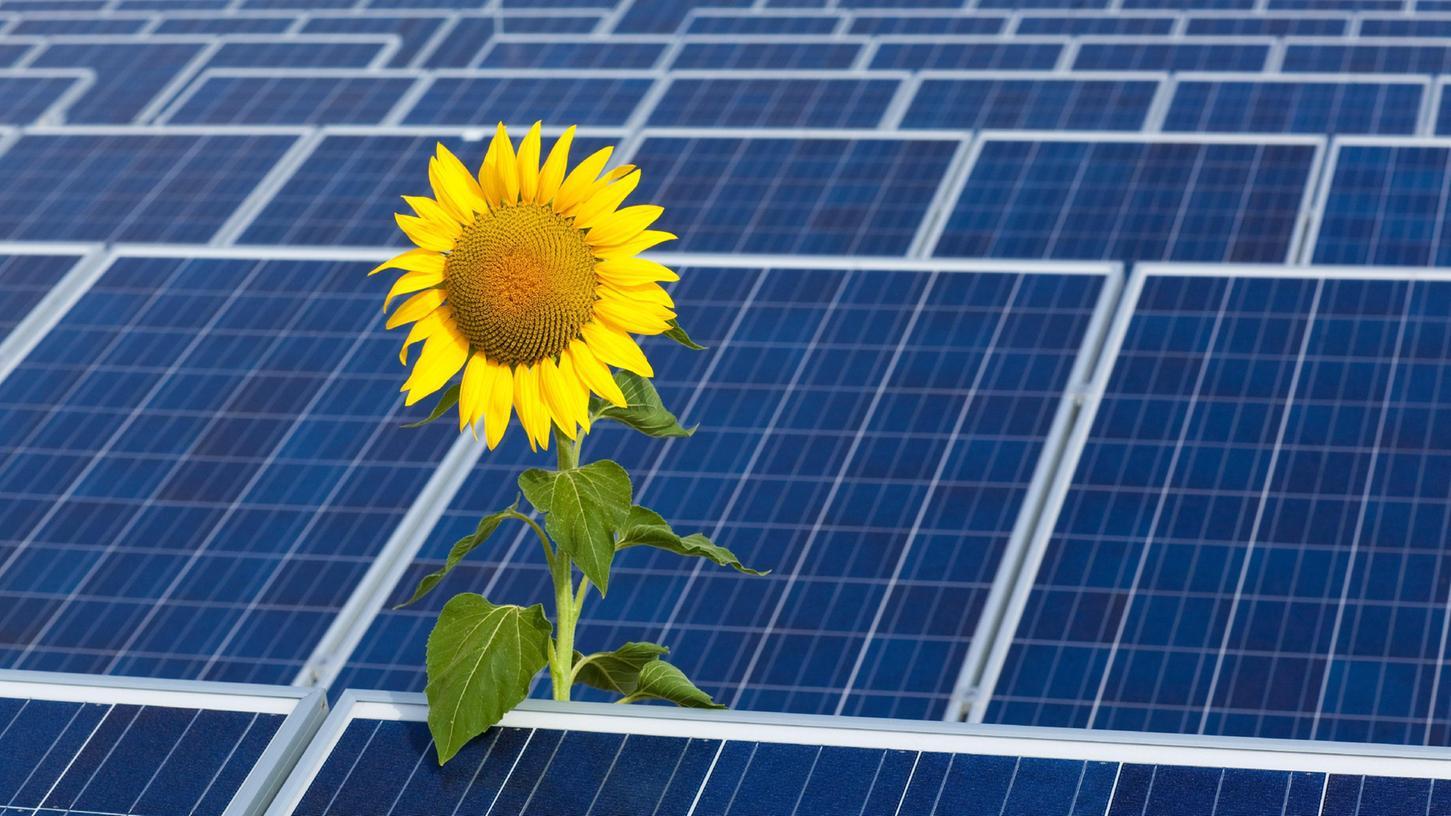 Ein Bild mit Symbolcharakter. Zwischen Photovoltaik-Anlagen strebt eine Sonnenblume gen Himmel. Beide haben das gleiche Ziel: die Sonne. Die Pflanze braucht sie zum Gedeihen; die Photovoltaik-Anlage wandelt die Sonnenbesrahlung in Strom um.
