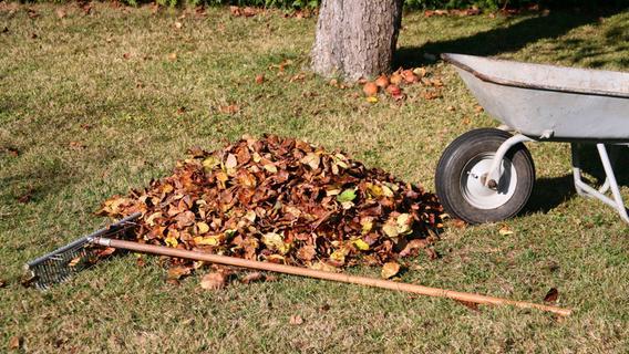 Laub vom Nachbarn im Garten: Wer muss die Blätterhaufen entfernen?
