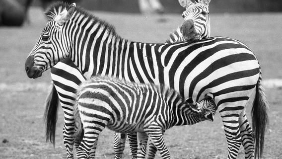 22. Oktober 1971: Neuzugänge im Tiergarten