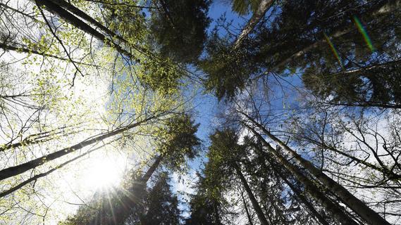 Klimawandel: So schlimm steht es um den Wald in Bayern