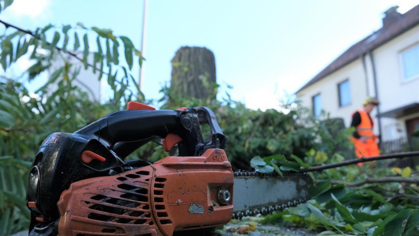 Wieder Baumfällungen: Hier setzt Sör in Nürnberg die Säge an