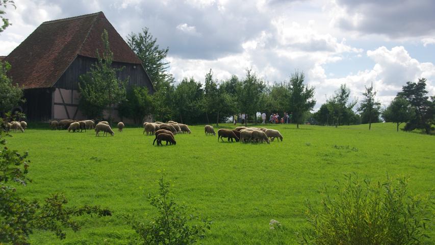 DasFreilandmuseum Bad Windsheimbietet nicht nur Idylle pur sondern auch einen Blick in das karge Leben früherer Generationen. Das 45 Hektar große Museumsgebäude zeigt über 100 Gebäude, die teils noch aus dem 14. Jahrhundert stammen und originalgetreu wiederaufgebaut wurden.