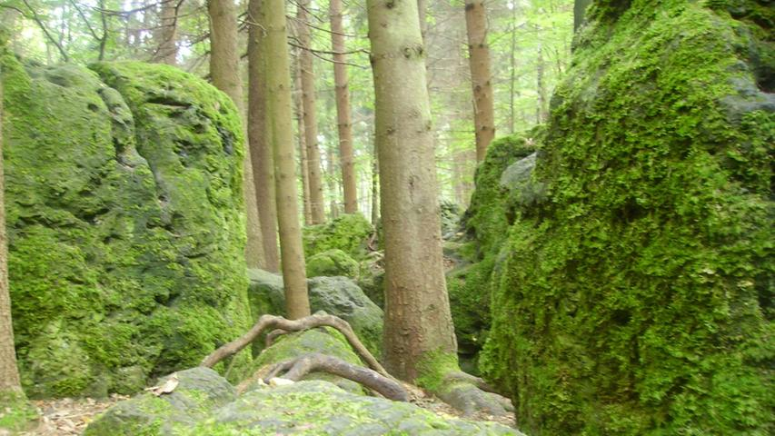 Schon lange hat sich für das etwa 8400 Quadratmeter große Waldstück bei Wohlmannsgesees der Name
