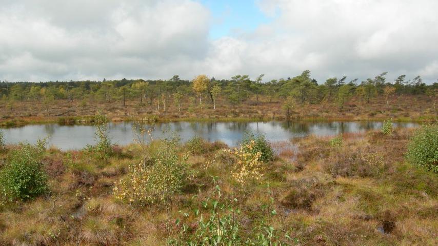 Das Schwarze Moor in der Rhön gehört zu den bedeutendsten Hochmooren Mitteleuropas. Es ist Bestandteil des europaweiten Schutzgebietsnetzes NATURA 2000 und gehört zum UNESCO-Biosphärenreservat Rhön. Hier sind eine Vielzahl an seltenen Tier- und Pflanzenarten beheimatet.Um möglichst vielen Besuchern diesen gefährdeten Lebensraum nahe zu bringen, ohne ihn zu stören,wurde ein Bohlensteg errichtet. Von ihm aus kann man das einzigartige Ökosystem erleben. 23 Informationstafeln vermitteln Wissenswertes über das Schwarze Moor.