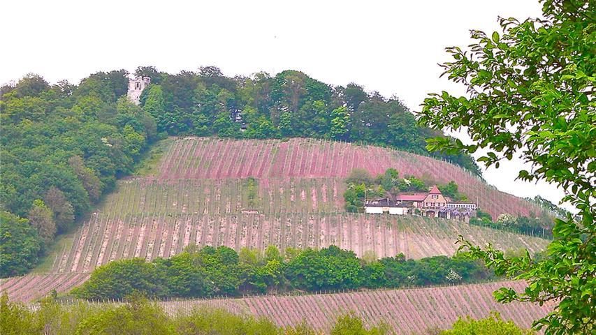 Der höchste Weinberg Frankens lockt seit vielen Jahren Besucher an. Viele Wanderer aus der Region suchen sich den Berg wegen dertollen Aussichten und der Natur als Ausflugsziel aus.