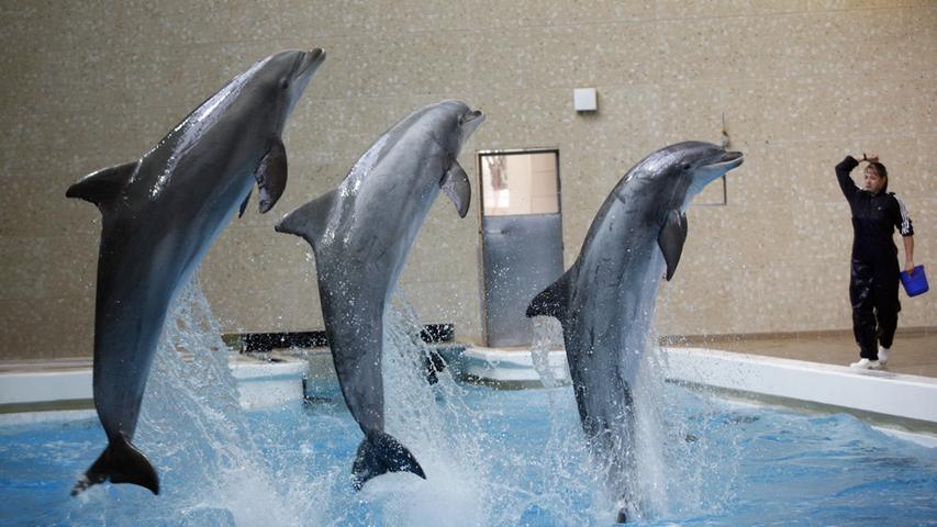 Lärm im Delfinarium: Experte hält Belastung für möglich