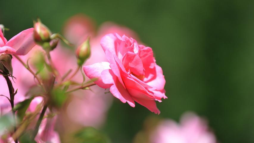 Mit Rosen sieht es zurzeit schlecht aus, denn auch die Blumenläden haben geschlossen. Doch einige Floristen bieten Click&Collect oder Lieferungen an. Notfalls geht auch ein Strauß von der Tanke. Der Partner oder die Partnerin freut sich immer über eine kleine Aufmerksamkeit - egal woher.