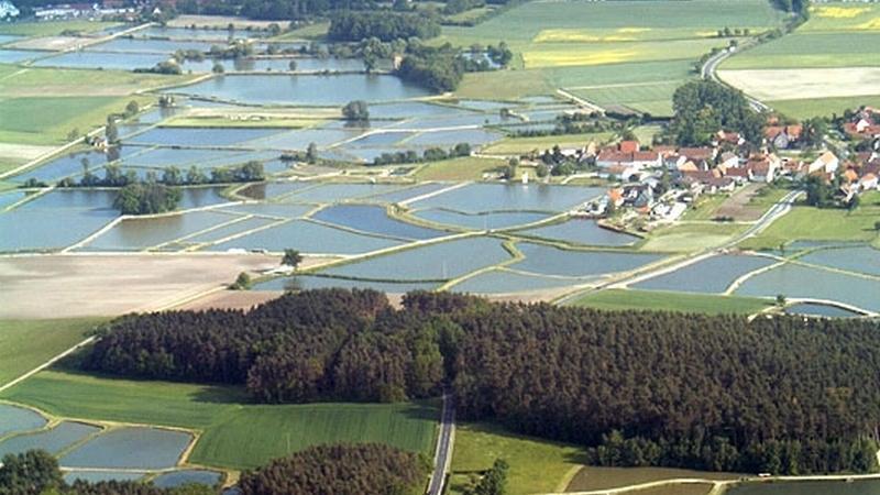 Viele Karpfenteiche prägen hier das Landschaftsbild.