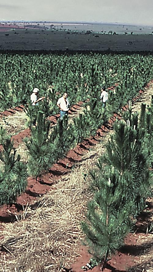 Faber-Castell sorgt inzwischen durch Aufforstung in Brasilien selbst für den Nachschub an Holz.