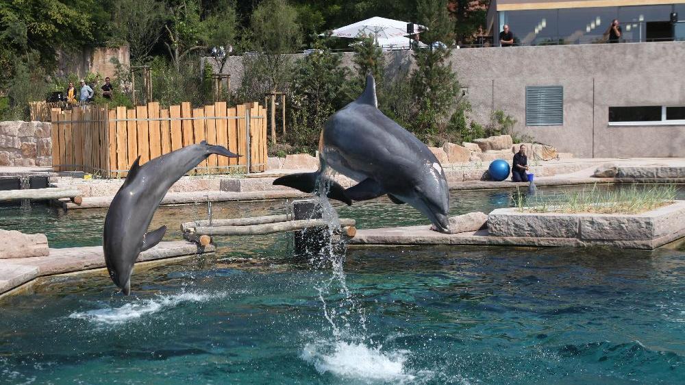 Über 1,2 Millionen Euro kostet das Becken, in dem die Delfine während der Sanierung schwimmen werden.