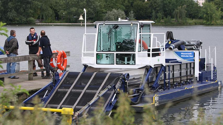 Künftig wird die junge Mähkuh auf dem Wöhrder See ihre Runden drehen und dafür sorgen, dass das Gewässer nicht zuwuchert.